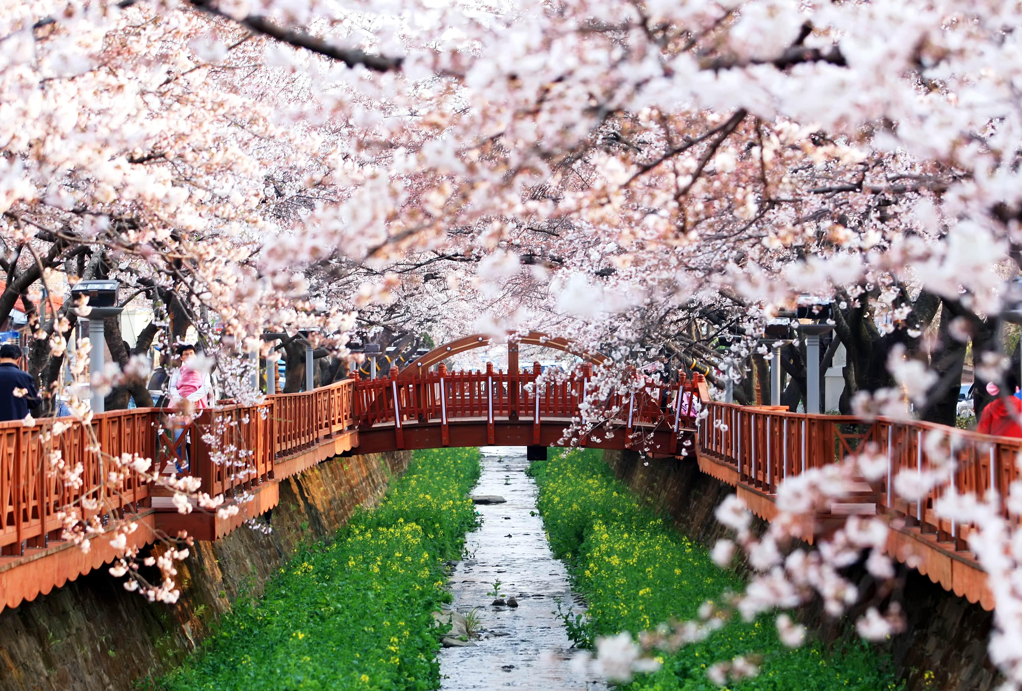 changwon-staden-och-cherry-blossom-festiva-secret-world