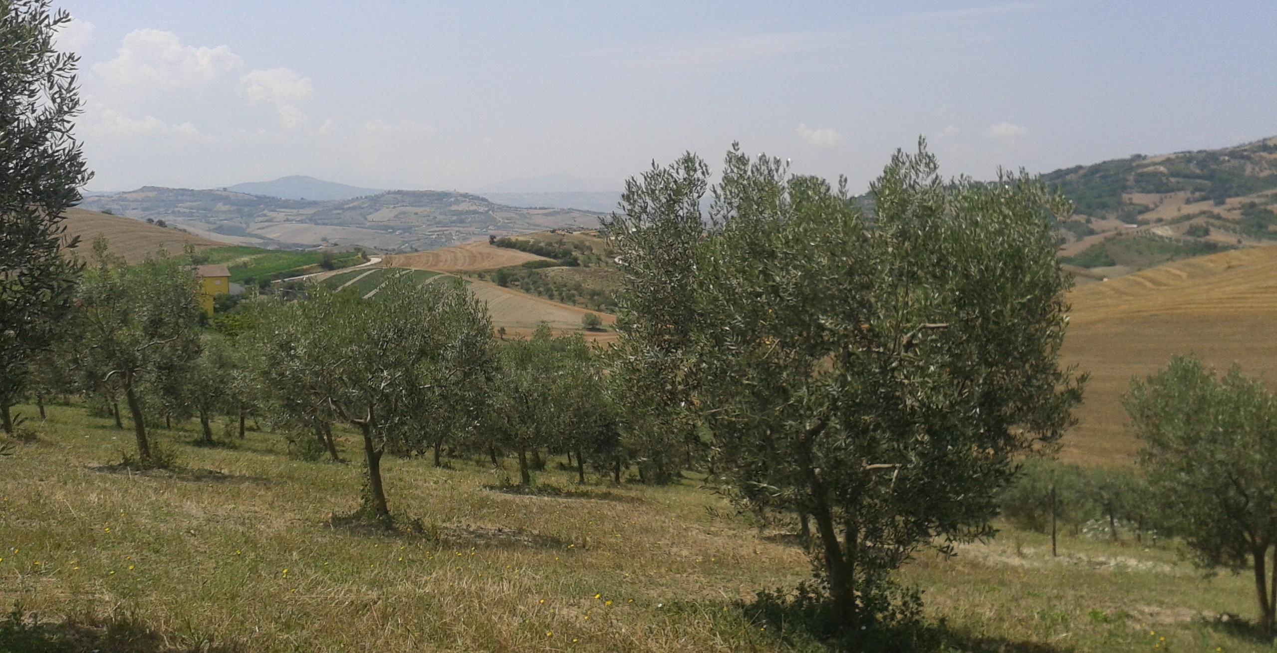 olivo-ravece-secret-world