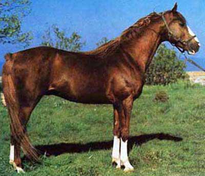 il-cavallo-di-persano-secret-world