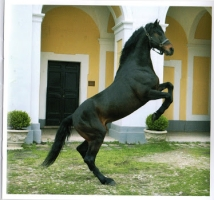 Il cavallo di Persano... - Secret World