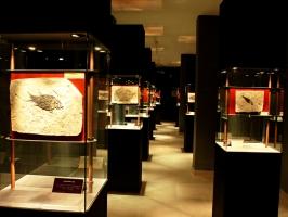Paleolab Geo-palaeontological Park... - Secret World