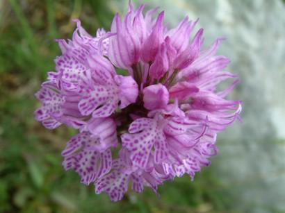 la-valle-delle-orchidee-di-sassano-secret-world