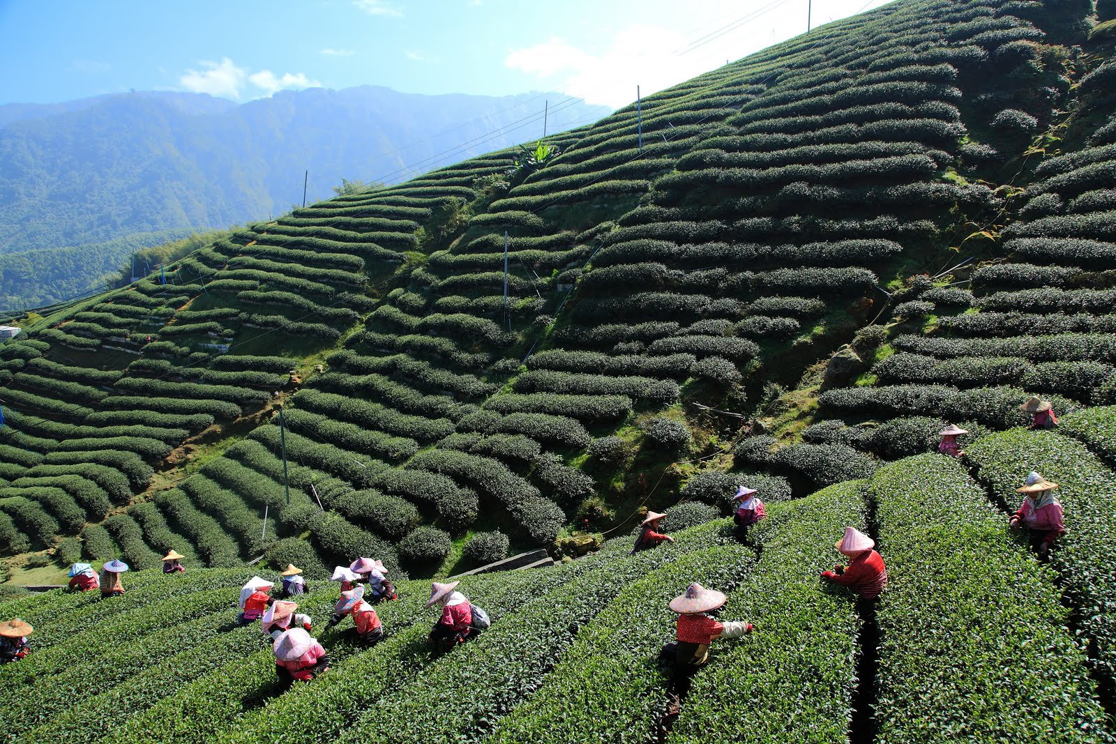 darjeeling-the-mecca-of-tea-secret-world