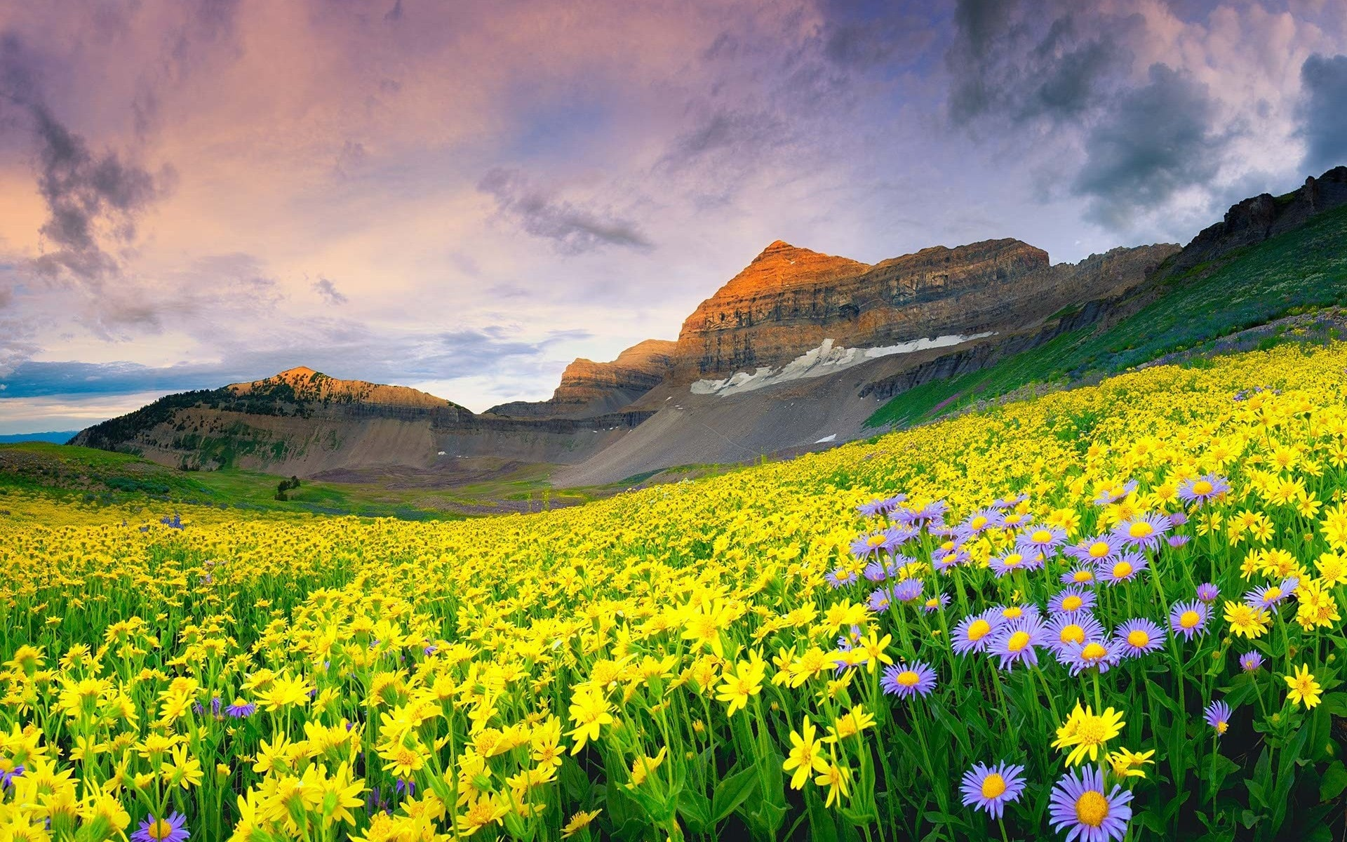 the-wonderful-valley-of-flowers-india-secret-world