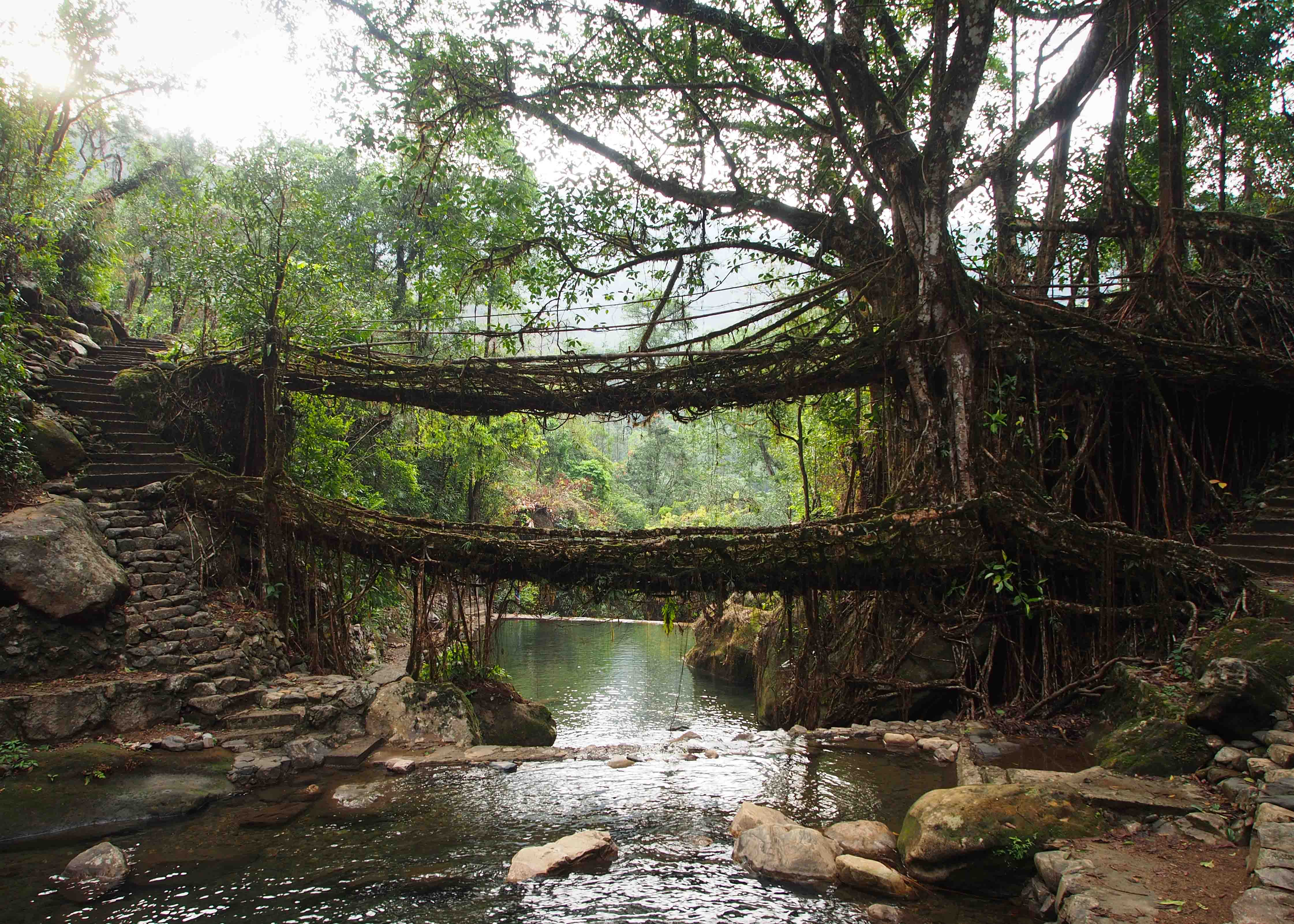 living-root-bridges-of-meghalaya-secret-world
