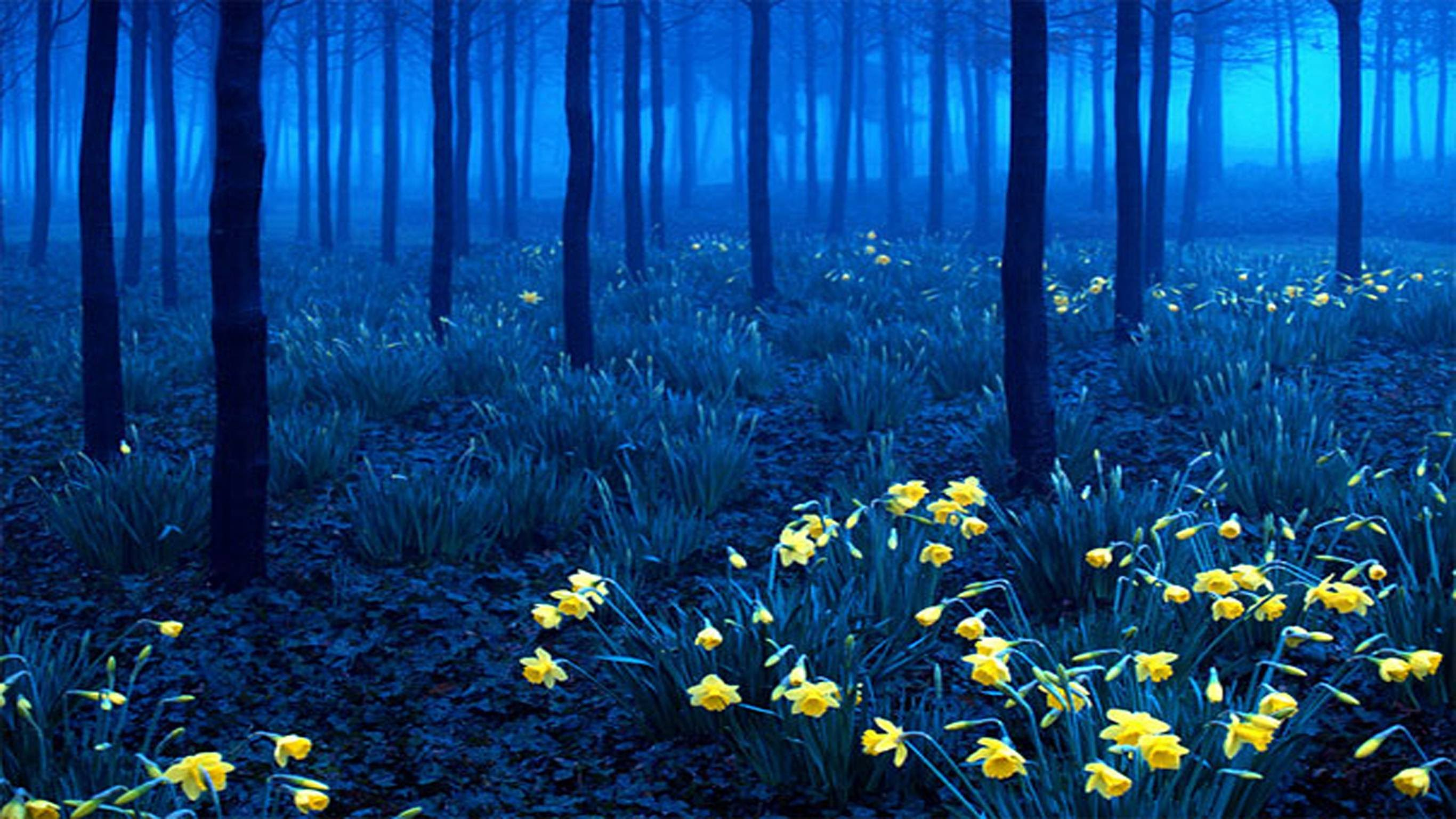 black-forest-secret-world