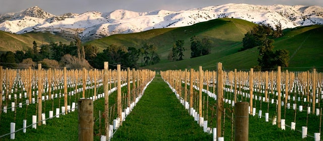 blenheim-and-the-wine-region-secret-world