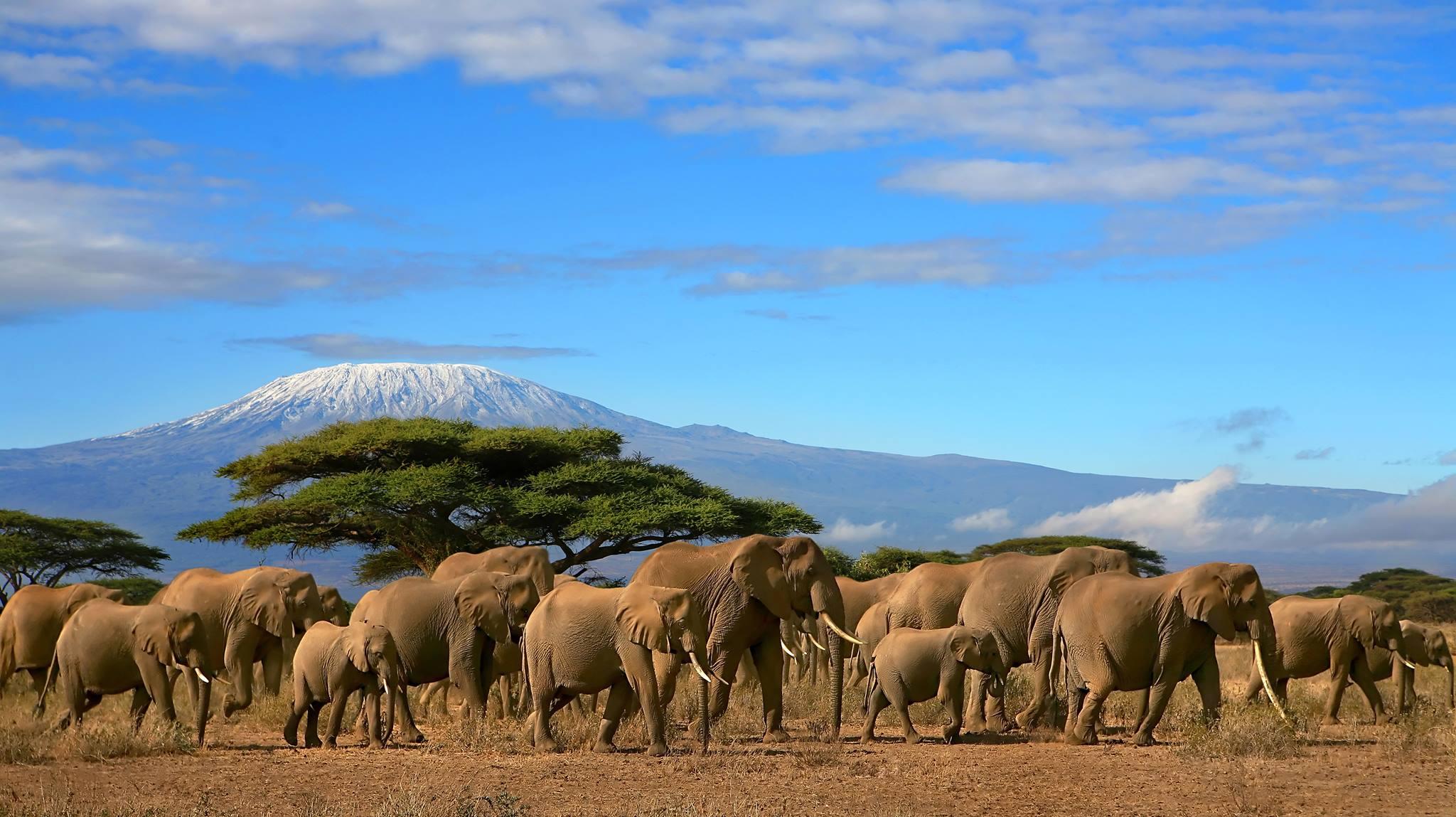 mount-kilimanjaro-secret-world