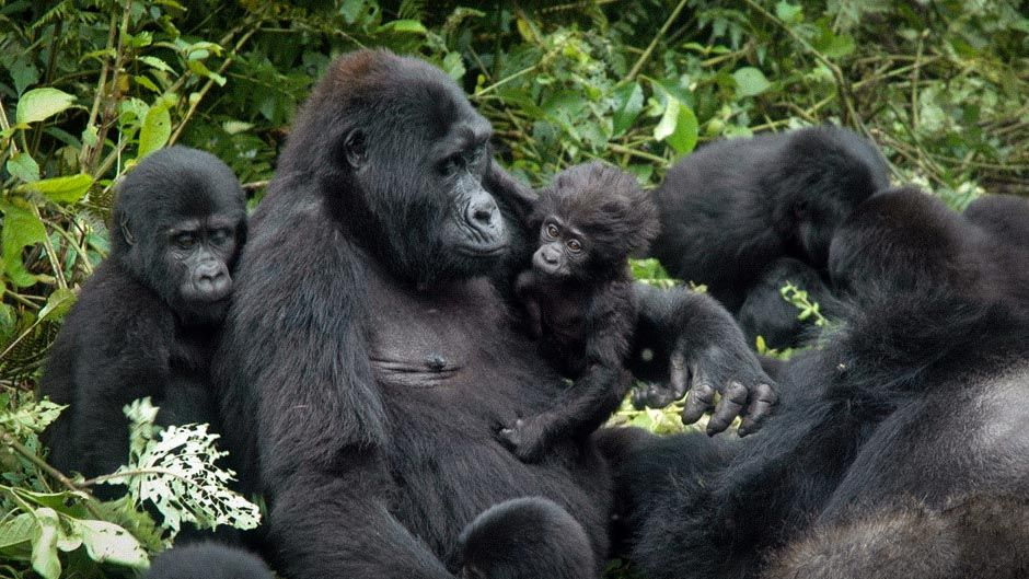 mgahinga-gorilla-national-park-secret-world