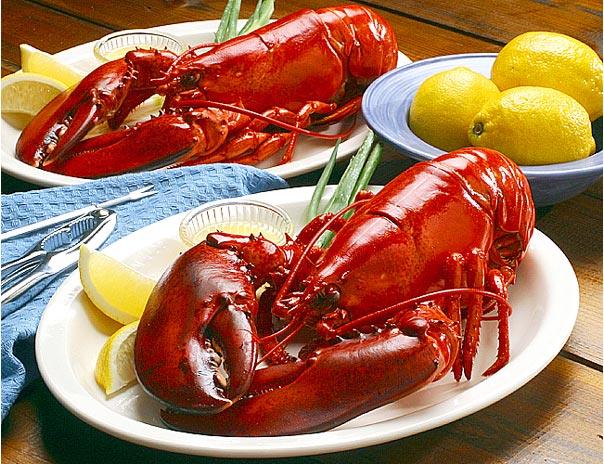 lobster-the-true-symbol-of-maine-secret-world