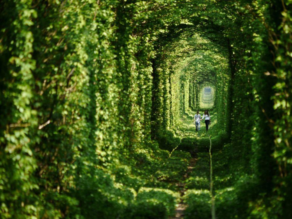 tunnel-of-love-tunnel-of-trees-ucra-secret-world