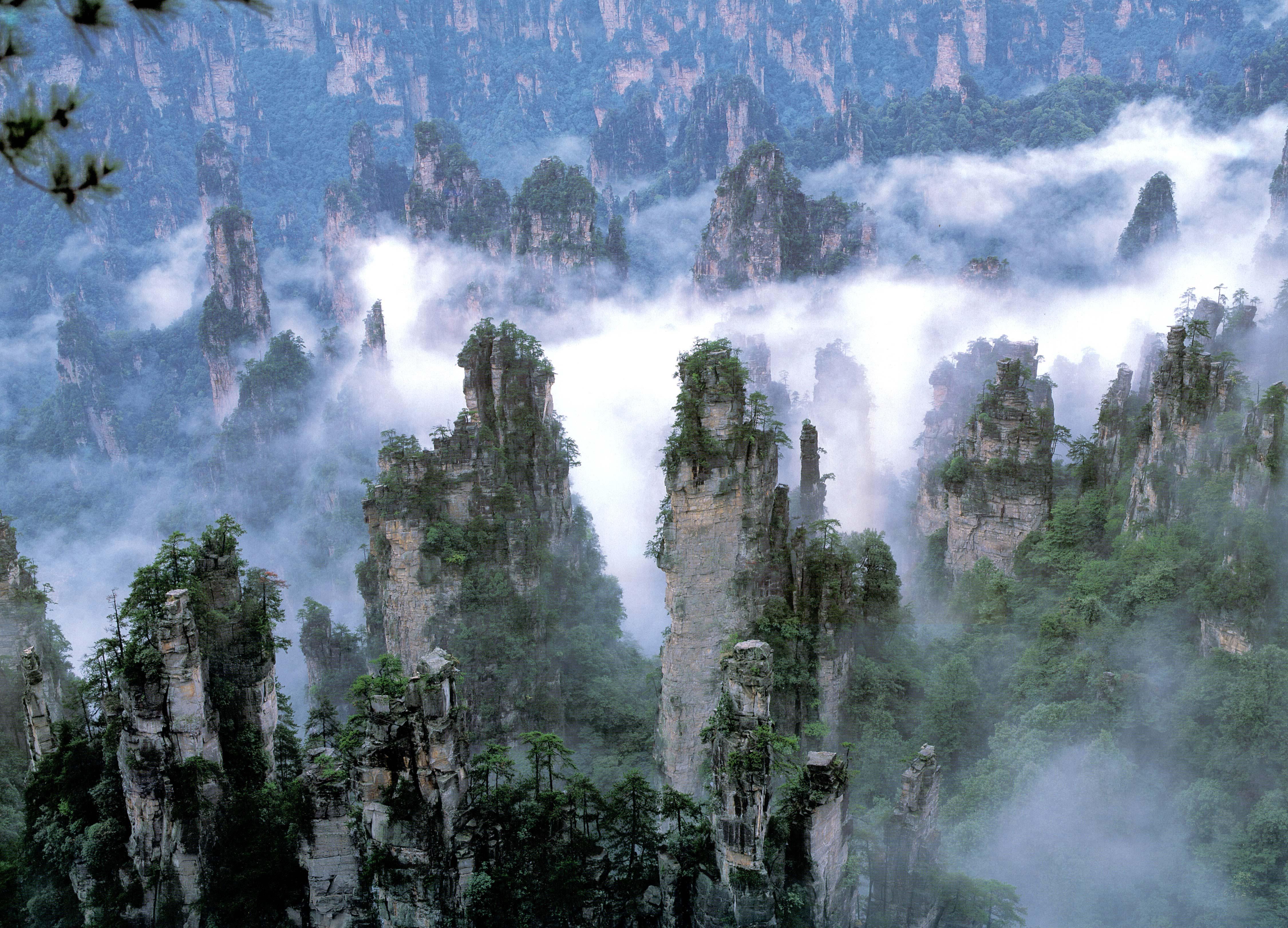 tianzi-mountains-the-monarch-of-the-pea-secret-world