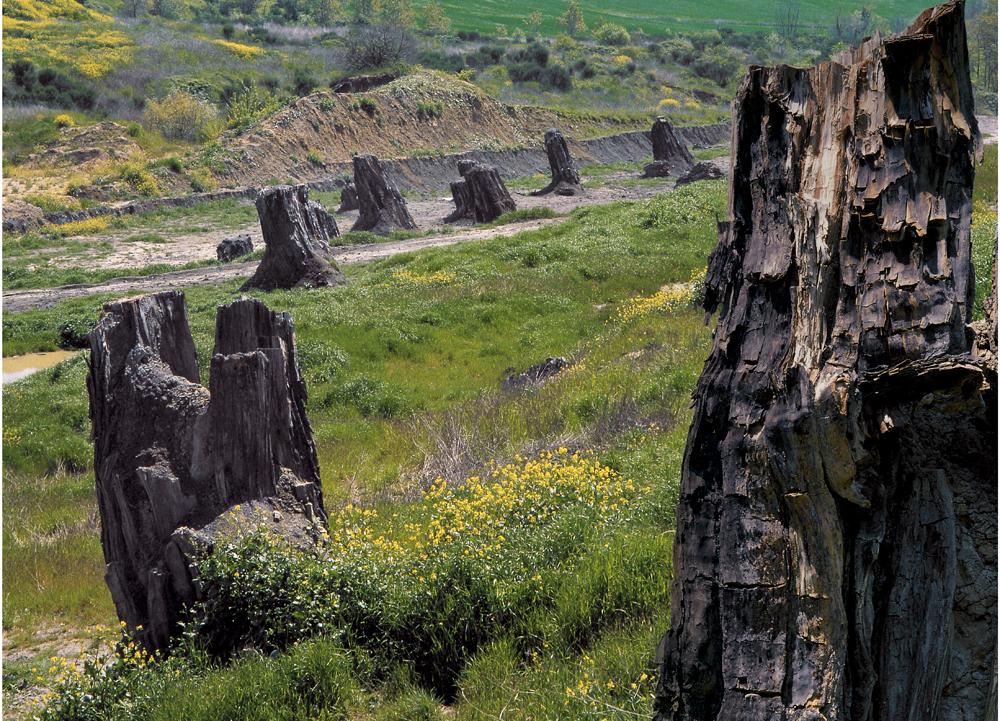 foresta-fossile-di-dunarobba