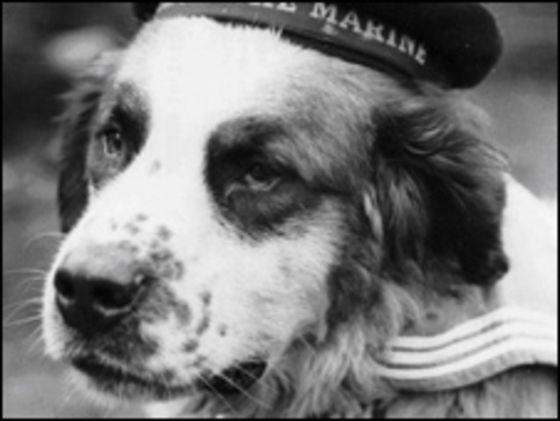 Bamse Dog Hero